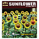 1/35 Sunflowers (10pcs)