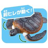 Ania AS-20 Green Sea Turtle Family (Floating Ver.)