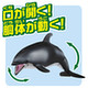 Ania AS-19 Pacific White-Sided Dolphin (Floating Ver.)